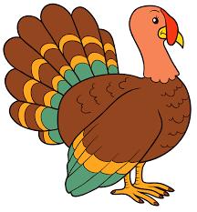 turkey p.png